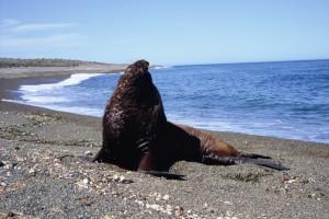 Patagonia F1040005